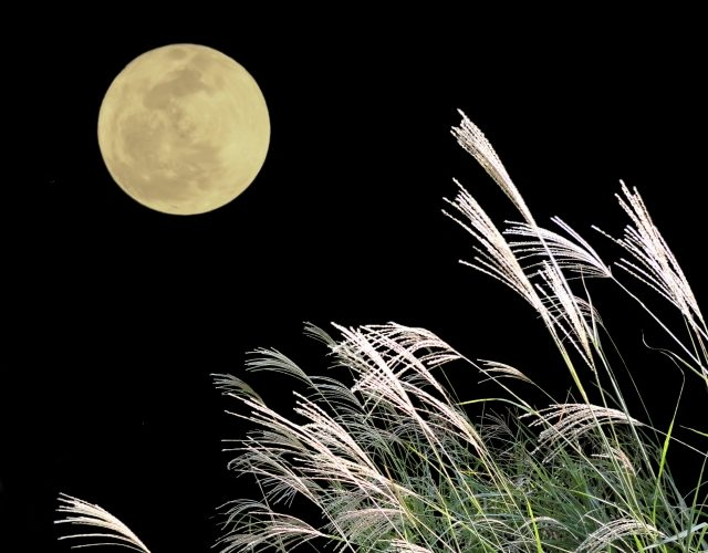 満月新月はお腹が張る【35w5d】